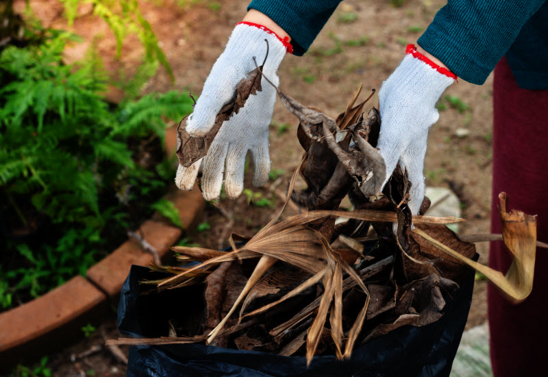 Hand of a woman clearing out the dried leaves from the garden