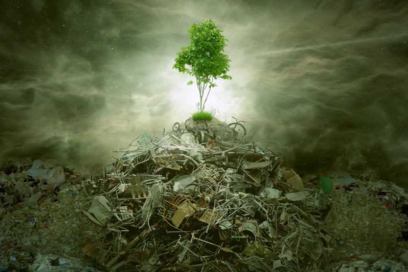 A tree on top of mountain heap of garbage